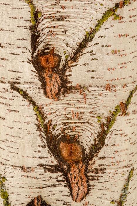 Uge Fuertes, Teruel, arte, creatividad,fotografia,metáfora visual, simbolismo, natutraleza,  vegetal, art, creativity, expresión, chopera, lengua de perro, tronco, visión creativa