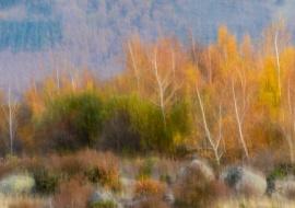 Blurred fall. Sierra de Béjar. Salamanca