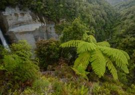 Mt Damper Fall, Ahititi, Taranaki
