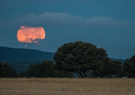 Dawn in the Béjar Serengeti