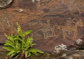Engraving at rocks. Domingo García