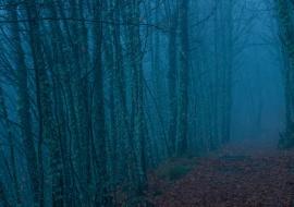 Chestnuts in the fog. Sierras de Béjar y Francia Biosphere Reserve