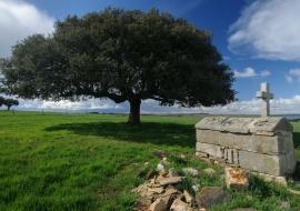 Life and death. Cespedosa de Tormes. Sierras de Béjar y Francia Biosphere Reserve