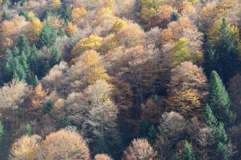 Vall de Lys