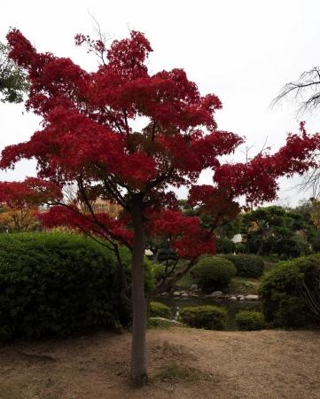 Parc del castell d'Osaka – Osaka - Japó