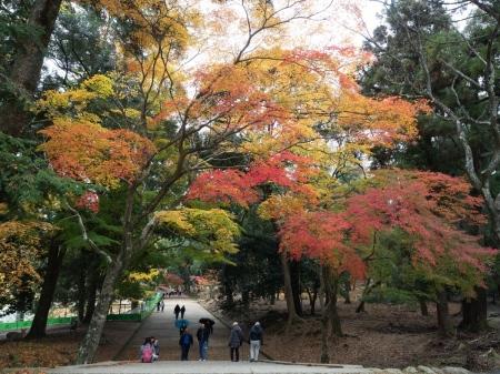 PARC DE NARA – NARA – JAPÓ