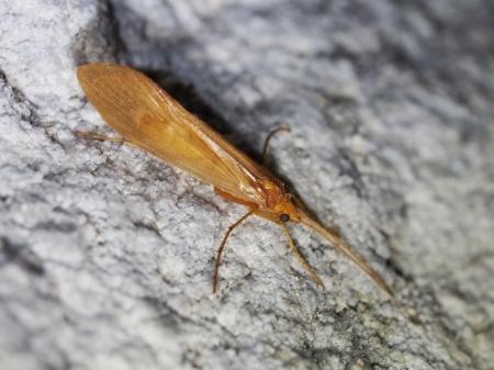 TRICÒPTER –  Cueva de Ardales – SOBRARBE - HUESCA