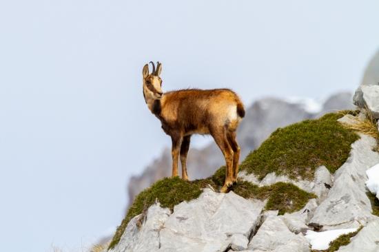 Casi 2000 metros de altura...un paraíso disfrutar de nuestros Picos de Europa