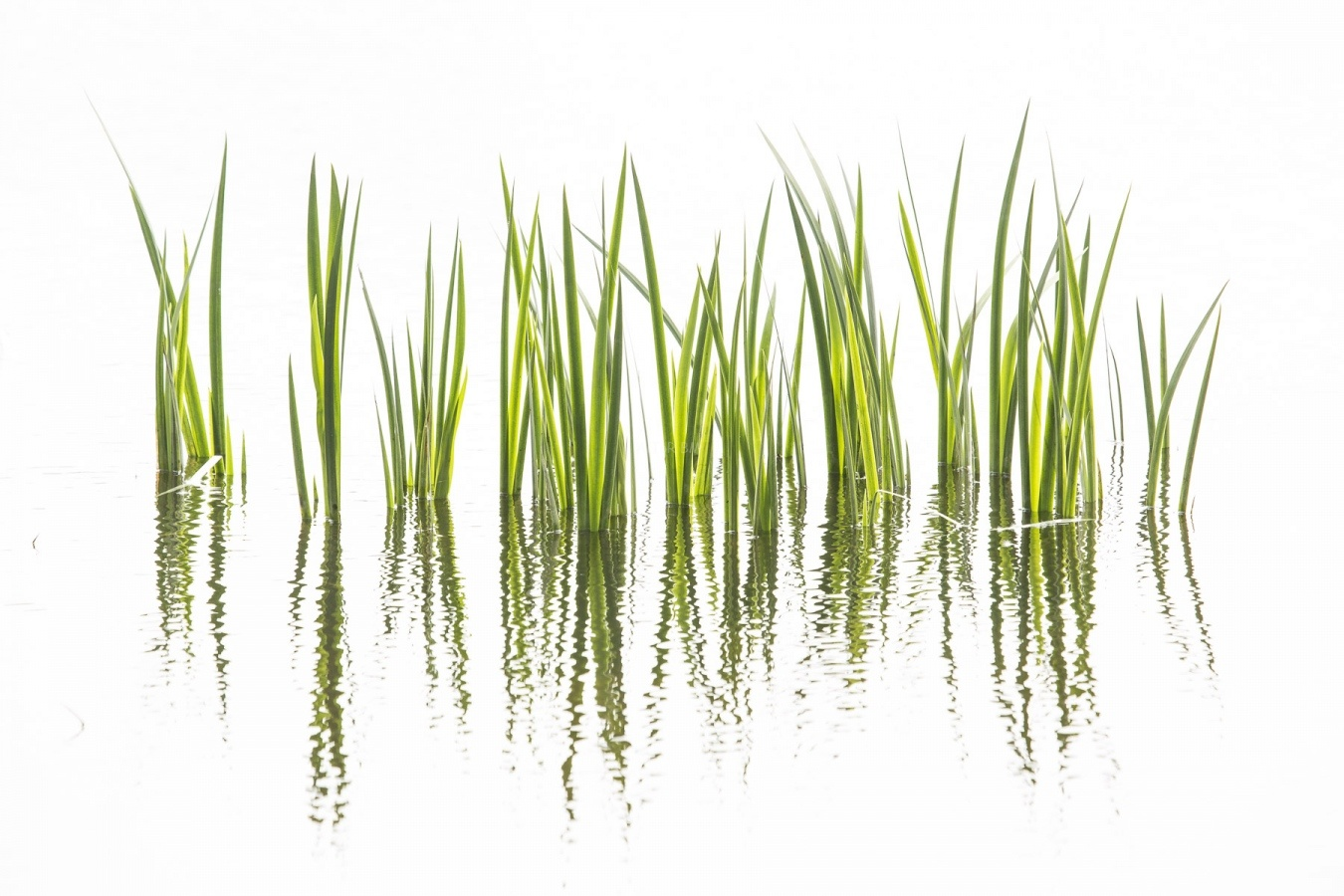 BioPhotoContest 2020 2º place Plants Finalist - my selection   Mi selección - fotografia de aitor badiola