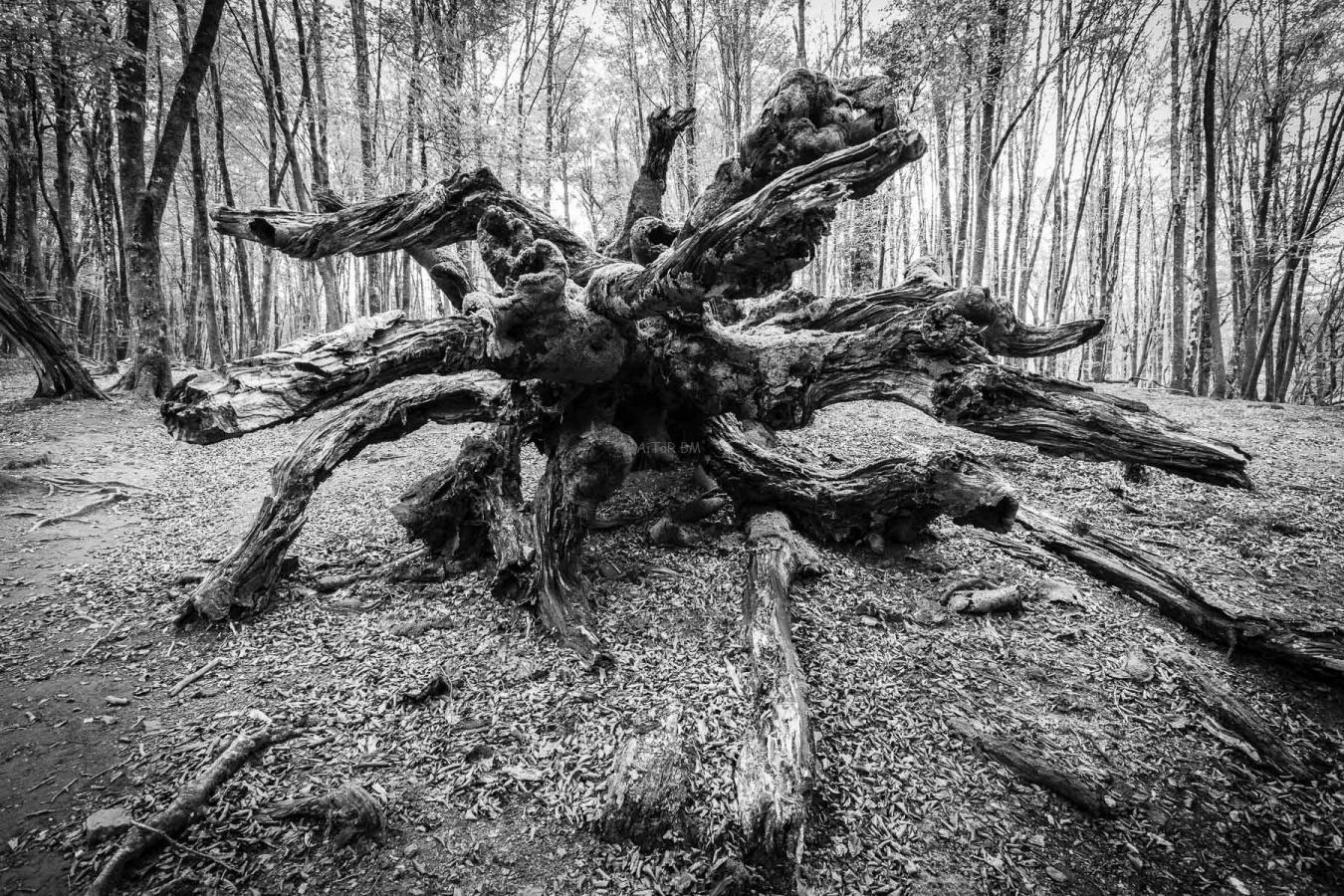 Entes - AiToR Badiola, Fotógrafo de Naturaleza