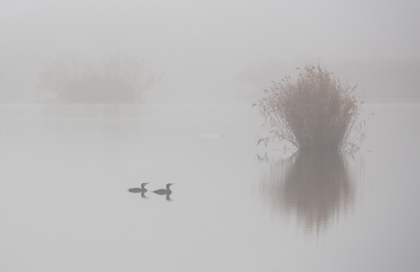 Sumi-e. Ukiyo-e. Minimalismo.  - AiToR Badiola, Fotógrafo de Naturaleza