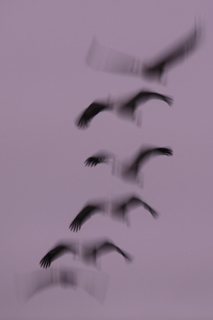 my selection   Mi selección - fotografia de aitor badiola