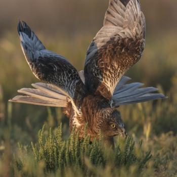 Aves colección-Birds Spain