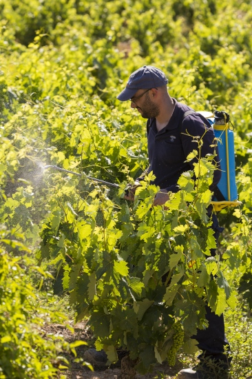 Viticultor