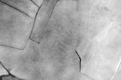 Tierra de Campos I, 1949