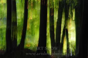 Cascada de Luz Matinal– Santa Fe, Parque Natural del Montseny, Catalunya. Edición: 10/10 + 2P/A