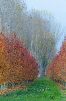 Poesía de la sensación vivida  - Zona Natural de los Aiguamolls de Rufea, Lleida, Catalunya. Edición: 10/10 + 2P/A