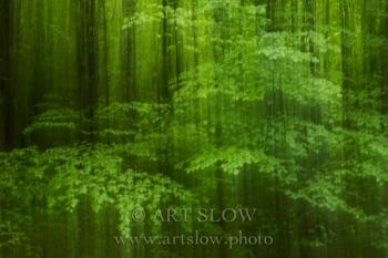 Velo de luz - Parque Nacional Hoge Veluwe, Holanda. Edición: 10/10 + 2P/A