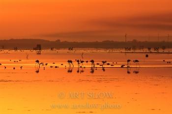 El Silencio del Alma - Bahía del Fangar, Reserva Natural del Delta del Ebro, Catalunya. Edición: 10/10 + 2P/A