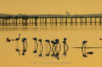 Sumi-e - Bahía del Fangar, Reserva Natural del Delta del Ebro, Catalunya. Edición: 10/10 + 2P/A
