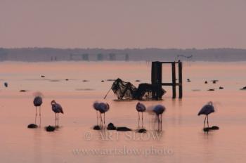 Viaje Interior - Bahía del Fangar, Reserva Natural del Delta del Ebro, Catalunya. Edición: 10/10 + 2P/A