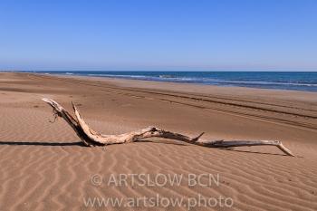 SERP-Playa del Garxal, Delta del Ebro, Tarragona, Catalunya. Edición: 09/10 + 2P/A