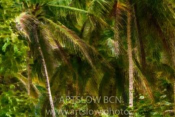 2002-9264-Cocoteros1, Bocas del Toro,Isla de Colón, Panamá