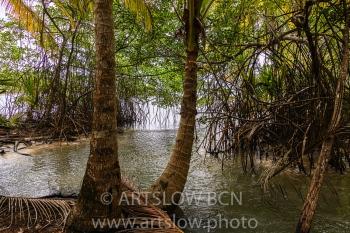 2002-9306-Cocoteros y Mangle rojo, Bocas del Toro,Isla de Colón, Panamá