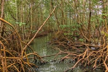 2002-9323-Manglar Rojo2, Bocas del Toro,Isla de Colón, Panamá