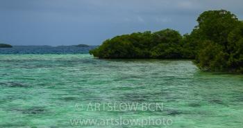 2002-9467, Coral Key, Manglar, Bocas del Toro,Isla de Colón, Panamá