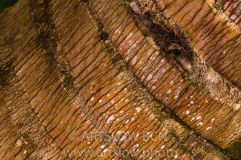 2002-9562-Tronco de cocotero, Bocas del Toro,Isla de Colón, Panamá
