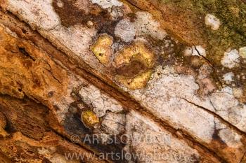 2002-9567-Líquenes 2 sobre tronco de árbol tropical, Bocas del Toro,Isla de Colón, Panamá