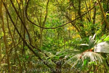 2002-9755-Lianas, Parque metropolitano Panamá