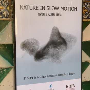 NATURE IN SLOW MOTION