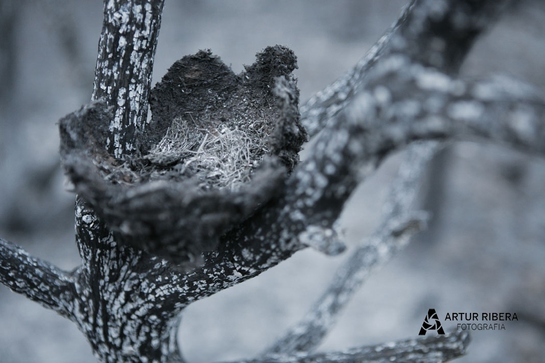 Después del fuego - Artur Ribera, Fotografia