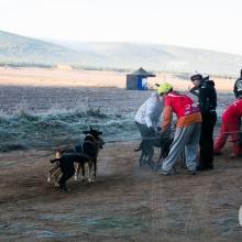 Campeonato de España Mushing 2016. Ólvega (Soria)