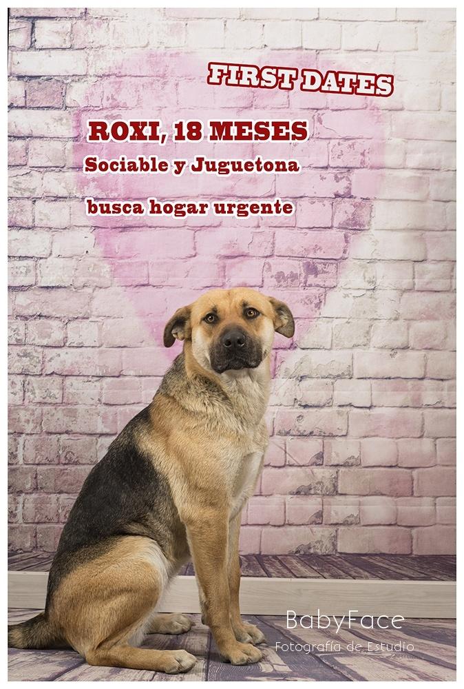 Perramórate - Fotografía profesional de Perros en Madrid
