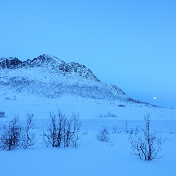 An Arctic day
