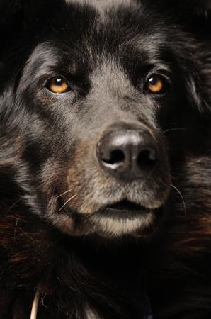 Fotografía profesional de Perros en Madrid
