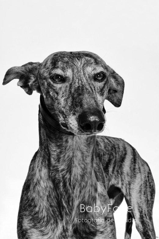 ALAI -  NUEVA VIDA - Fotografia de mascotas en Madrid