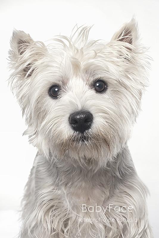 Retratos Caninos - Fotógrafo de perros en Madrid