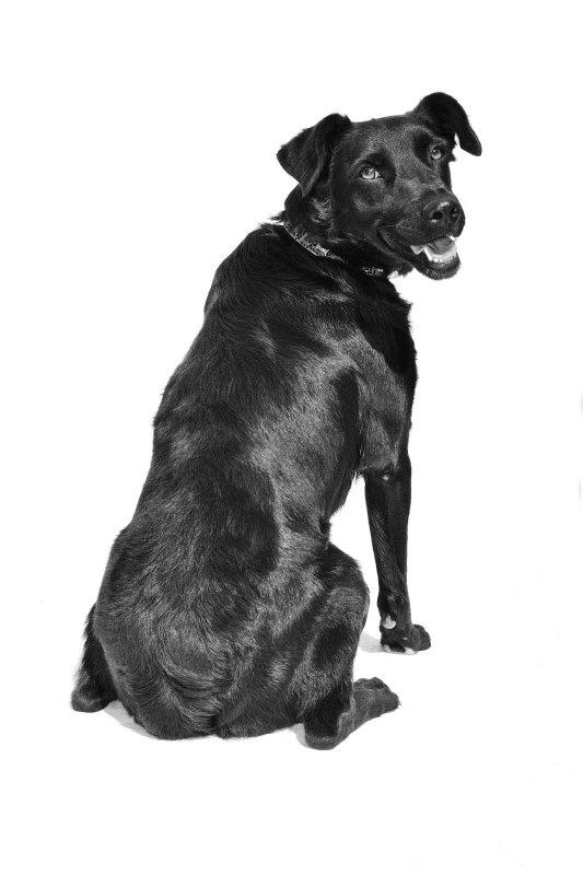 KORA -  NUEVA VIDA - Fotografia de mascotas en Madrid