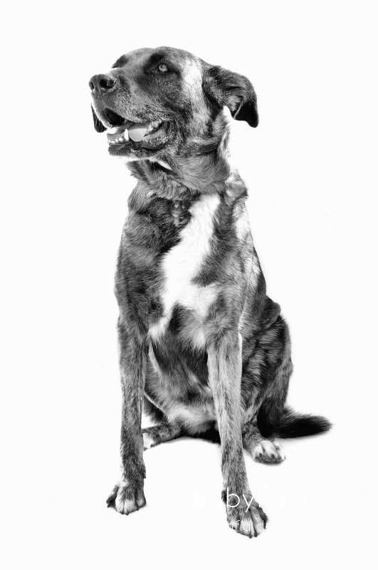 LUCI -  NUEVA VIDA - Fotografia de mascotas en Madrid