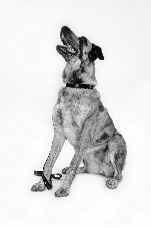 NUBE -  NUEVA VIDA - Fotografia de mascotas en Madrid