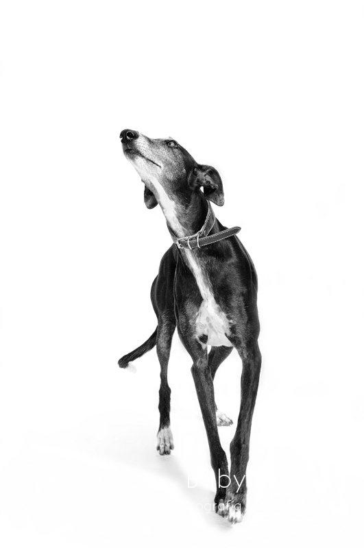 CORA -  NUEVA VIDA - Fotografia de mascotas en Madrid