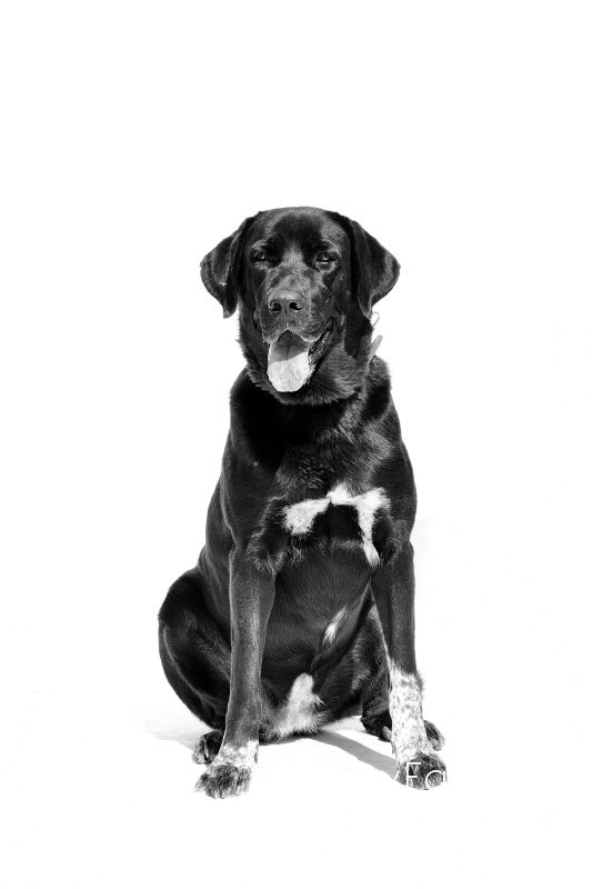 ZAHARA -  NUEVA VIDA - Fotografia de mascotas en Madrid