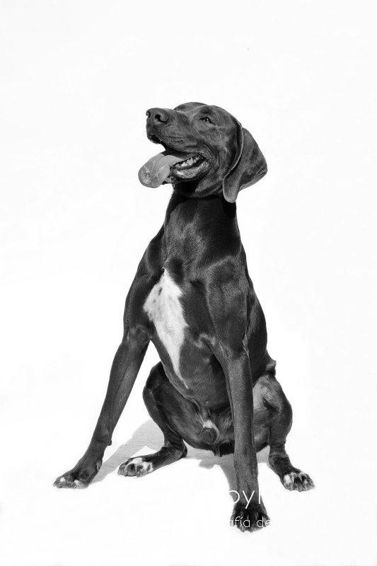 TURRÓN -  NUEVA VIDA - Fotografia de mascotas en Madrid