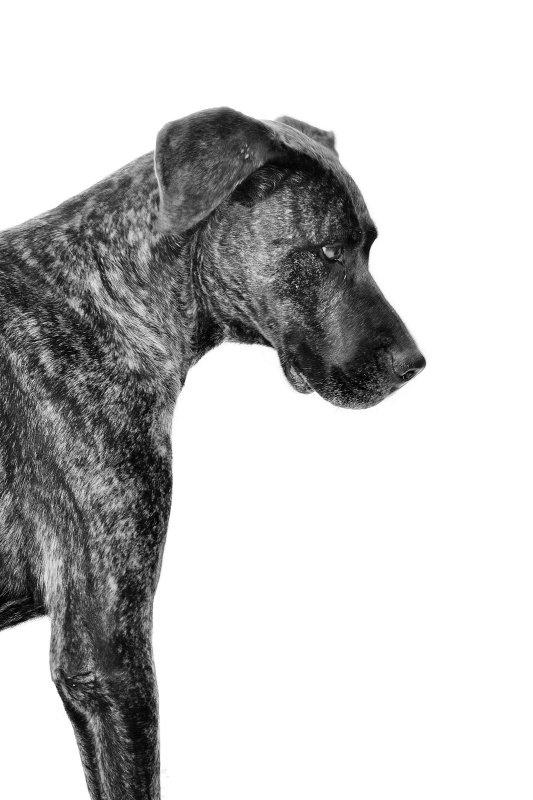 TAI -  NUEVA VIDA - Fotografia de mascotas en Madrid