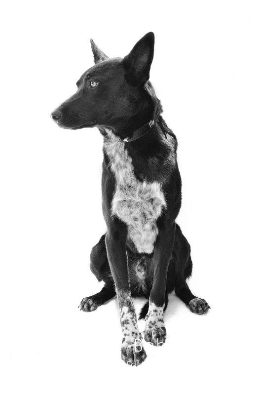 TAVY -  NUEVA VIDA - Fotografia de mascotas en Madrid