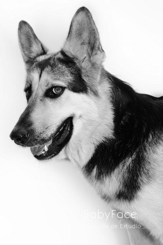 DOLAR -  NUEVA VIDA - Fotografia de mascotas en Madrid